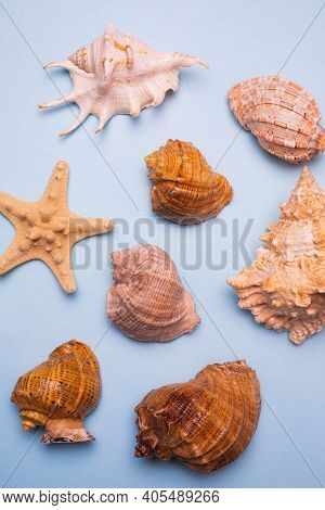 Seashells On A Blue Background . Large Seashells. Sea Shells. Copy Space. Blue Background