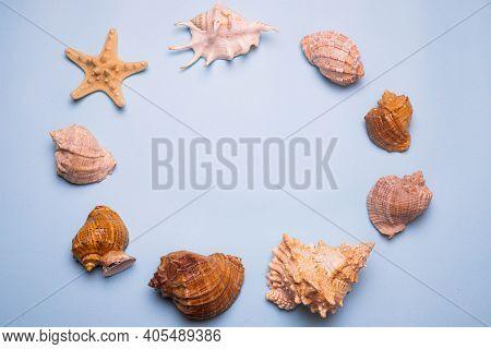 Seashells On A Blue Background . Large Seashells. Sea Shells. Copy Space. Blue Background