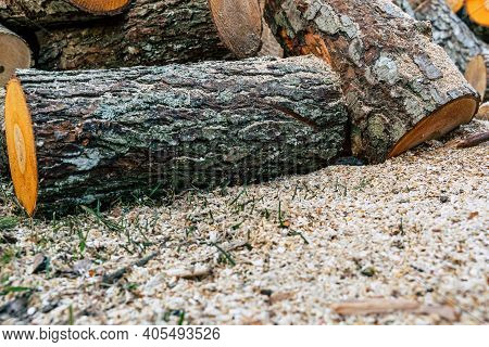 Huge Alder Logs In Pile With Out Of Focus Saw Dust In Foreground