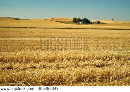 Farmstead In Cut Wheat Fields. Farm Buildings In Sunshine Amid Cut Fields In The Palouse. Washington