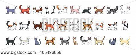 Set Of A Cats Cartoon. Cats Breeds - Vector Illustratrion