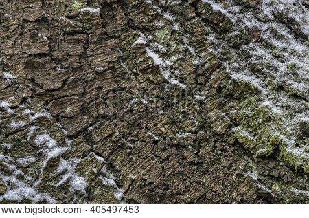 A Nice Background Or Wallpaper Of Bark From A Spruce , A Nice Photo