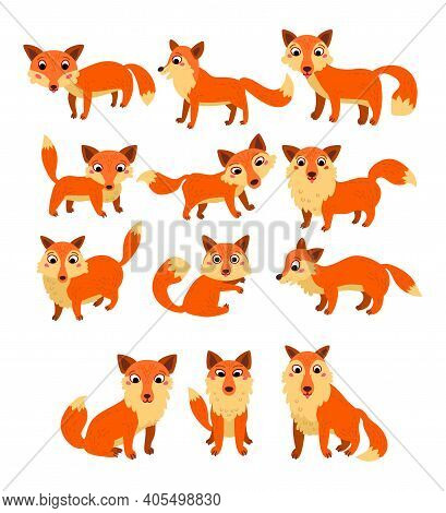 Set Of Cartoon Cute Fox Isolated On White Background. Collection Of Wild Different Character Woodlan