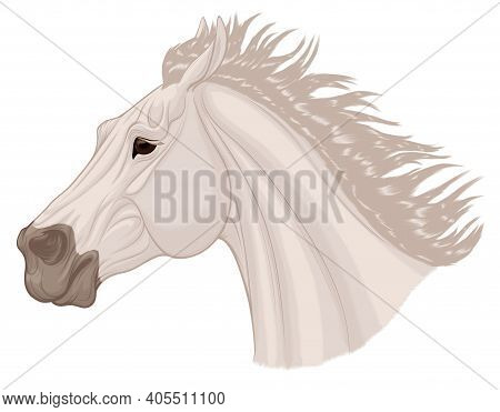 Portrait Of A Running Bronco With A Long Thick Mane. Galloping Gray Stallion Pulled Its Ears Back. V