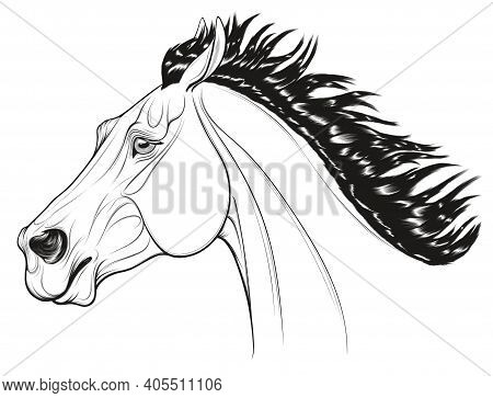 Black And White Portrait Of A Running Bronco With A Long Thick Mane. Galloping Stallion Pulled Its E