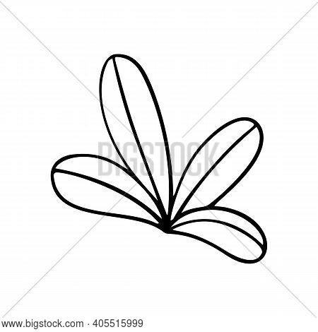 Tropic Grass, Leaf Stylized Vector Illustration. Doodle Illustration. Leaves Of Palm Tree Rainforest