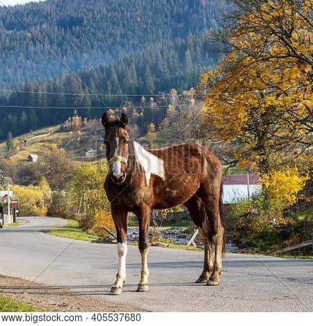 A Horse Stands On The Carriageway Of A Winding Road In A Small Mountain Village. Colorful Autumn. Pa