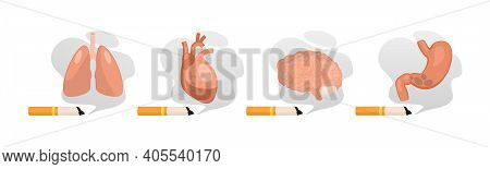 Harm From Smoking. Unhealthy Habit Smoking And Harm For Organs, Cancer Of Lungs, Heart Disease, Dise