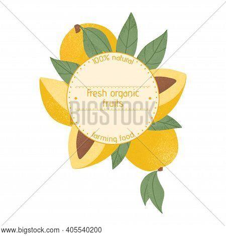 Ripe Mango, Whole, Sliced And Half Sliced Mango. Sweet Mango Fruits Vector Hand Drawn Label Design.