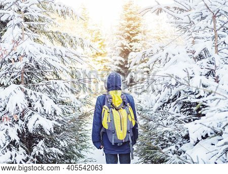 Walk In Winter Forest. Rear View Of Man Walking On Snow Amidst Trees In Forest During Winter. Lonely