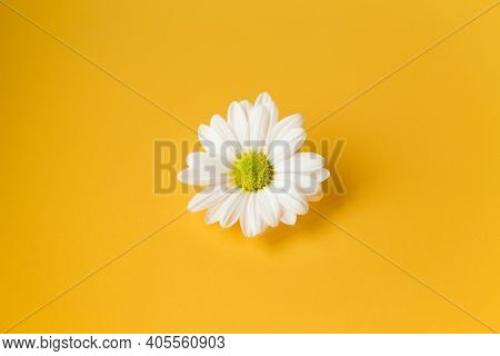 One White Daisy Flower On Yellow Background