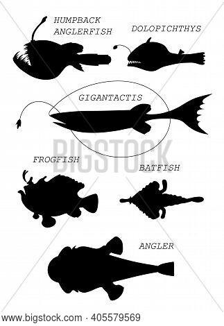 Deep-sea Fishes. Black Silhouette Vector Illustratuin Collection.