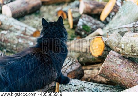 Black Domestic Cat Wondering On Pile Of Alder Logs - Background With Copy Space