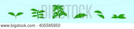 Set Of Stevia Logo Cartoon Icon Design Template With Various Models. Modern Vector Illustration Isol