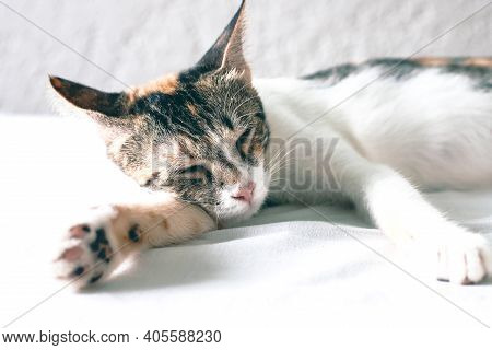Cute Kitten Sleeping On White Bed. Lovable Domestic Pet In White Room Interior. Three Color Cat Retr
