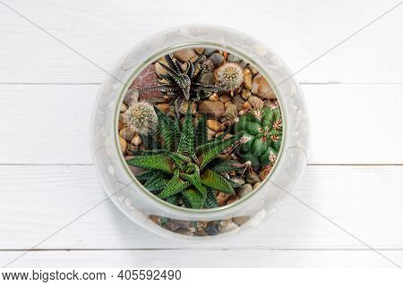 Mini Succulent Garden In A Spherical Glass Terrarium On A White Wooden Table. Top View.