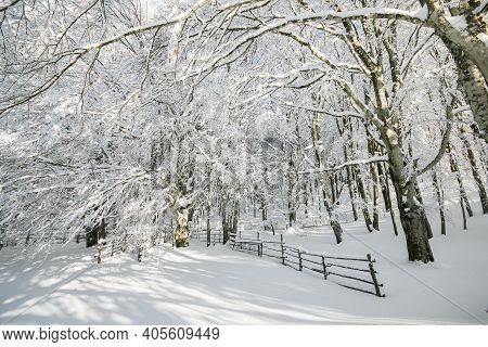 Enchanted Beech Forest With Snow In The High Mountain Of Italy