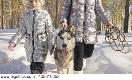 Woman And Small Child Walking Running In Winter Forest With Of Husky Dog. Young Mother With Daughter