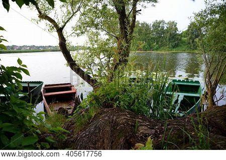 Weeping Willow Trunk Near The River And Wooden Boats