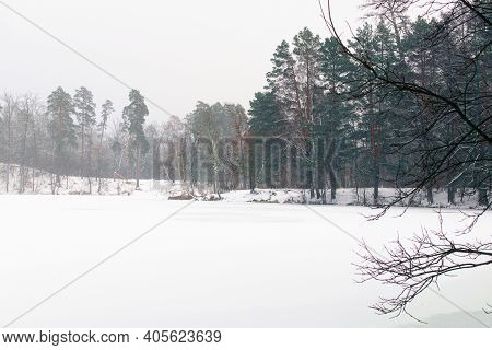 Snowfall In The Forest. Scenic Winter Landscape Of Frozen Pond In The Forest. Evergreen Wood And Sho