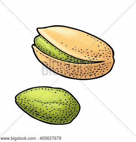 Pistachio Nut With And Without Shell. Vector Engraving Color Vintage Illustration