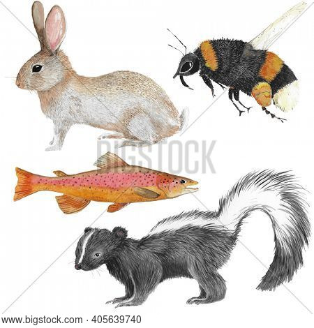 Four different forest animal illustrations in watercolor as skunk, river trout,rabbit and honey bee