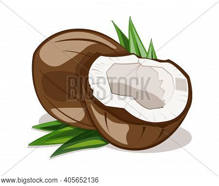 Coconut Nut Icon. A Ripe Tropical Jungle Fruit With White Juicy Pulp. Palm Leaf Growing In Green Tro