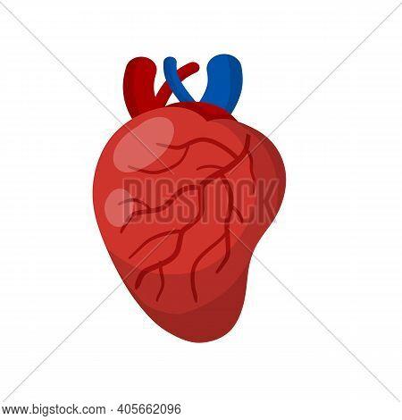 Heart. Human Internal Organ. Medicine And Cardiology