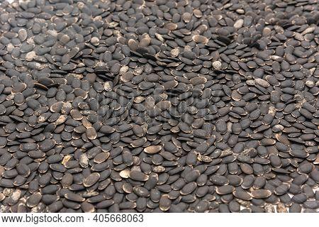 Many Luffa Or Loofah, Luffa Aegyptiaca Seeds Isolated On White Background