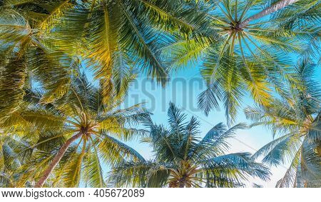 Palm Trees Against Blue Sky. Palm Trees At Tropical Coast, Beautiful Nature Scenery. Relaxing Enviro