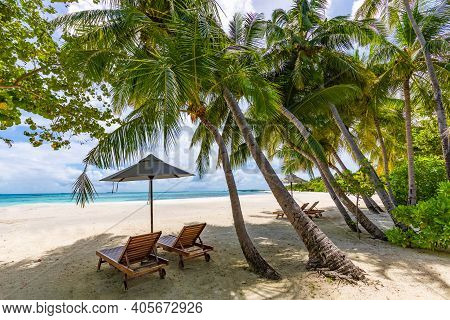 Tropical Beach Background As Summer Landscape With Lounge Chairs And Palm Trees And Calm Sea For Bea