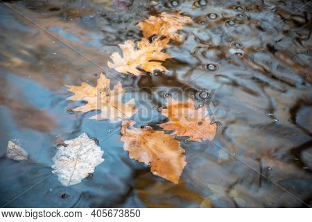Leaves Float Downstream With Bubbles In A Forest Stream With Gentle Soft Waves And Ripples. Nature B