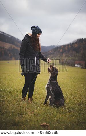 Young Dog Teacher Gives Some Crackers To Her Beautiful Dog Bitch. Rough-coated Bohemian Pointer Open
