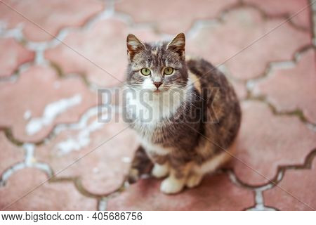 Lovely Tricolor Kitty Rest On The Red Tiled Pavement In Winter. Cat Relax Outdoor.