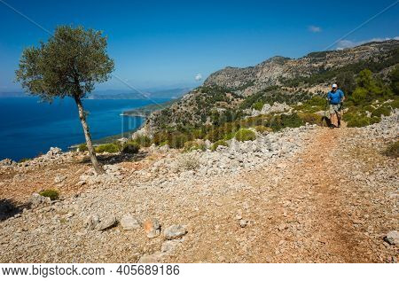 Hiking Lycian way. Man is trekking on dry stony path, high on mountain on Mediterranean coast, lonely olive tree, Outdoor activity in Turkey