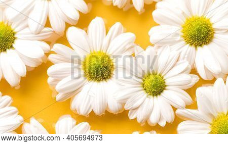 Close Up Beautiful White Daisy Flowers On Yellow Water Background