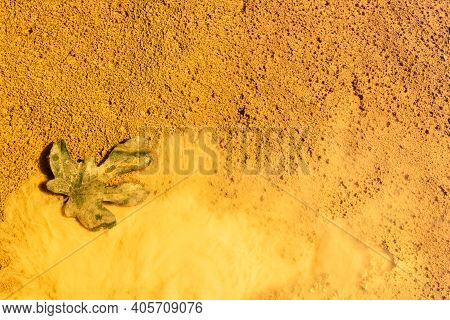 Fig Leaf On Yellow Mud, Rio Tinto River, Andalusia Spain.