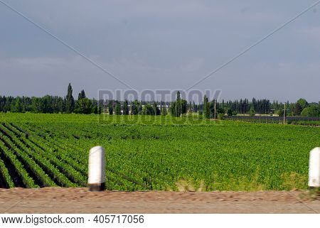 Viticulture And Winegrowing In Mendoza, Argentina