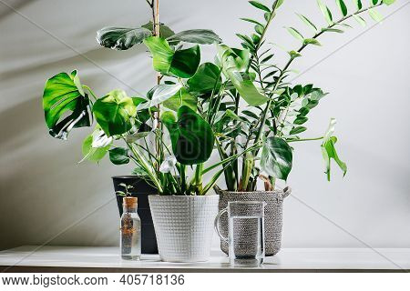Mini Garden With Big Potted Plants. Monstera And Other Kind. Water Jug In Front.
