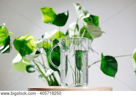 Glass Water Jug In Front Of Beautiful Healthy Monstera In A Pot