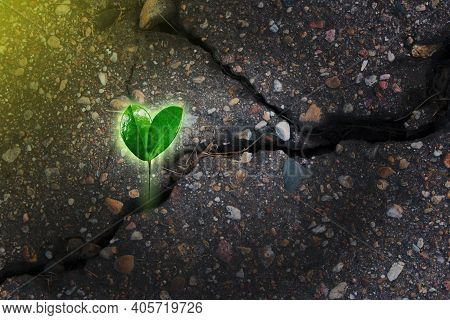 Green Plant Growing From Crack In Asphalt On Road. Beginning Of New Life, Growth, Motivation, Strugg
