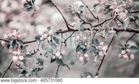 Spring Flower Landscape. Spring Blooming Spring Flowers Against Blue Sunny Sky. White Flowers In Spr