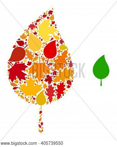 Floral Leaf Mosaic Icon Designed For Fall Season. Vector Floral Leaf Mosaic Is Designed Of Random Fa