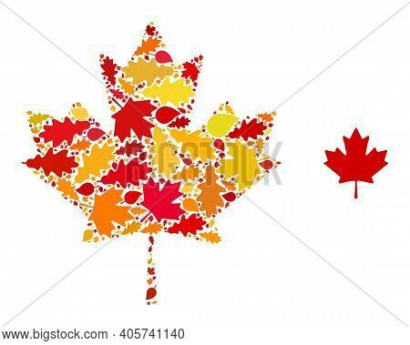 Maple Leaf Mosaic Icon Constructed For Fall Season. Vector Maple Leaf Mosaic Is Composed From Random