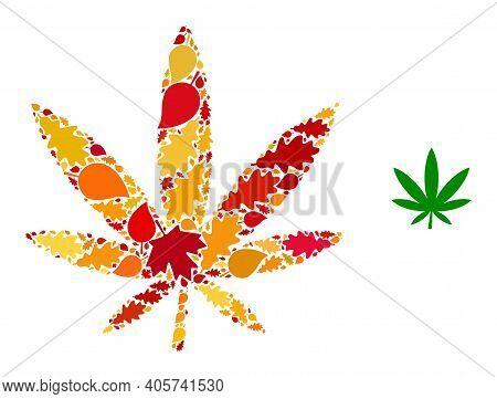 Marijuana Mosaic Icon Combined For Fall Season. Vector Marijuana Mosaic Is Constructed From Randomiz
