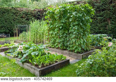 Vegetable Patch With Raised Beds In A Large English Garden, Uk