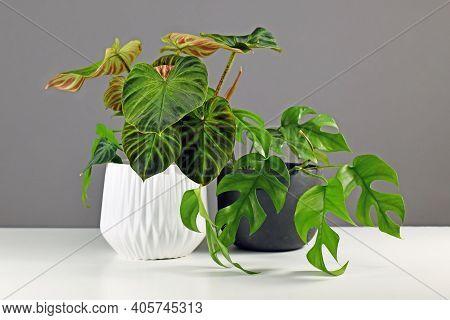 Tropical Houseplants In Beautiful Flower Pots On White Desk