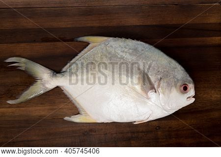 A Pampano Fish Isolated On A Dark Cutting Board