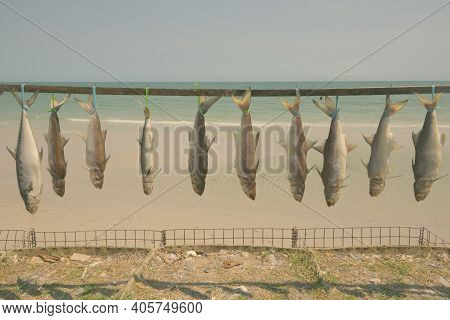 Picture Of Freshly Caught Fishes Tied Up And Hanged To Dry For Preservation Near The Coast Of The Be