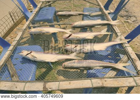 Freshly Caught Fishes Lay Down On The Net To Dry Under The Sun For Preservation Near The Coast Of Th